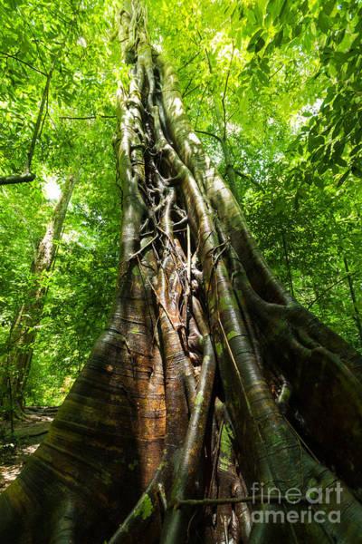 Wall Art - Photograph - Tree Trunk by Atiketta Sangasaeng