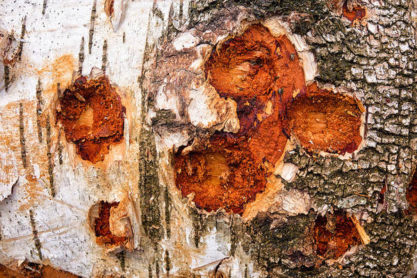 Photograph - Tree Trunk Closeup - Wooden Structure by Matthias Hauser