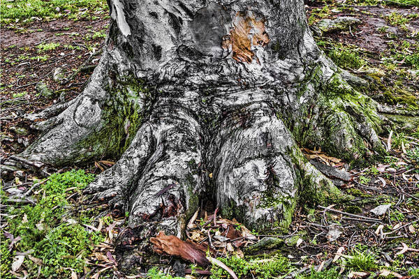 Digital Art - Tree Trunk by Photographic Art by Russel Ray Photos