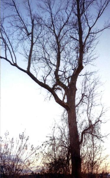 Wall Art - Photograph - Tree by Valerie Howell