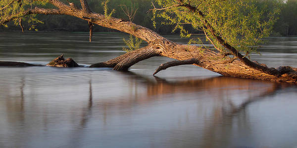 Photograph - Tree Wash by Theo O Connor