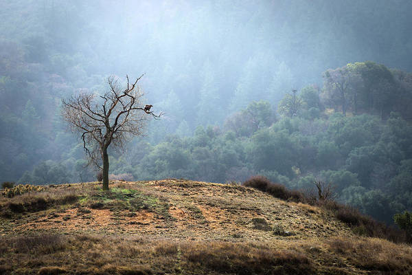 Photograph - Tree With Golden Eagle by Alexander Kunz