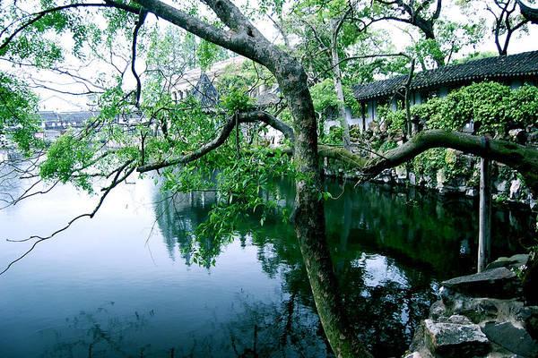 Photograph - Tree by HweeYen Ong