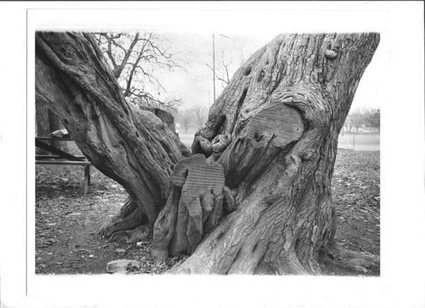 Photograph - Tree2 by Bc Adamkowski