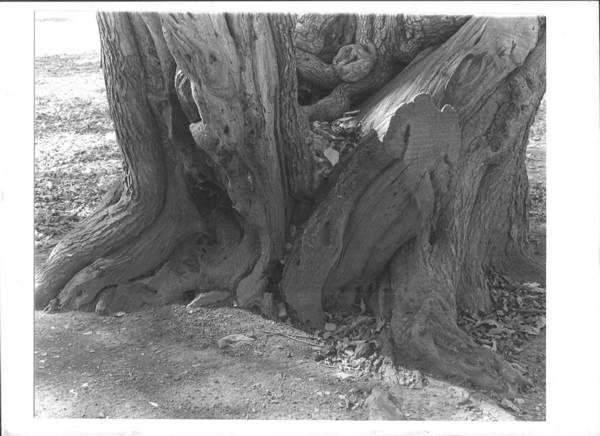 Photograph - Tree4 by Bc Adamkowski