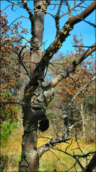 Photograph - Treecomp 2009 by Glenn Bautista