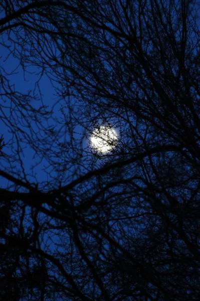 Photograph - Treed Moon by Joseph Yarbrough