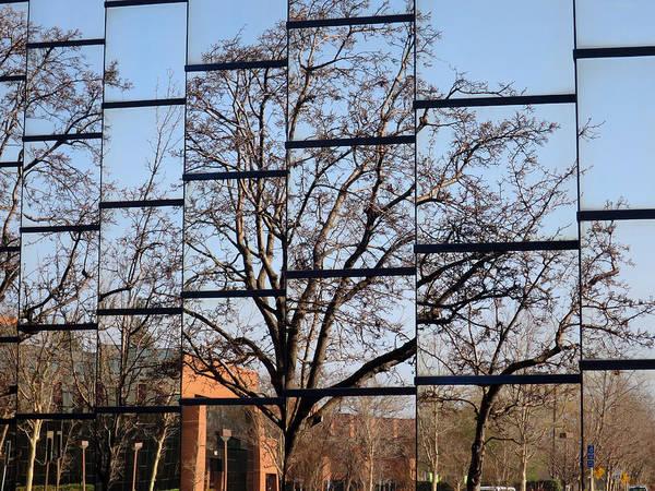 Photograph - Treeflection by Rick Locke