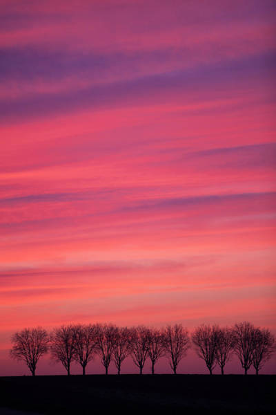 Treeline Photograph - Treeline At Sunset by Pascal Goetgheluck/science Photo Library