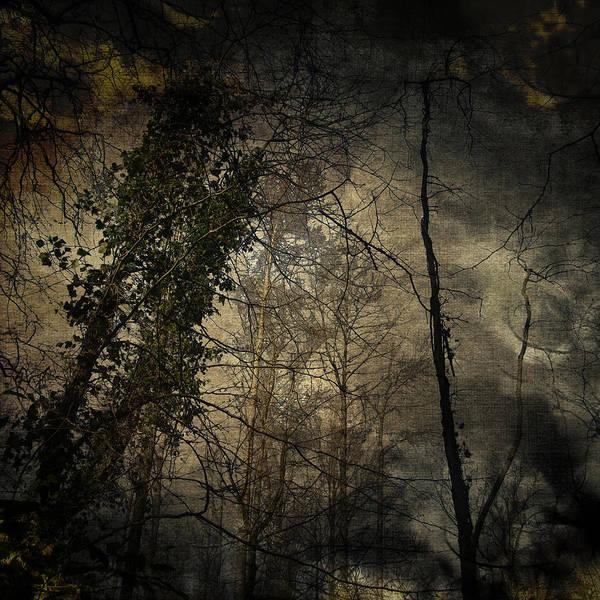 Wall Art - Digital Art - Trees 4 by Andy Walsh