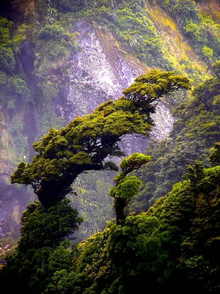Photograph - Trees Against The Wall Of Milford Sound by David Rich