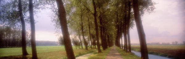 Wall Art - Photograph - Trees Along A Path, Holland, Netherlands by Panoramic Images