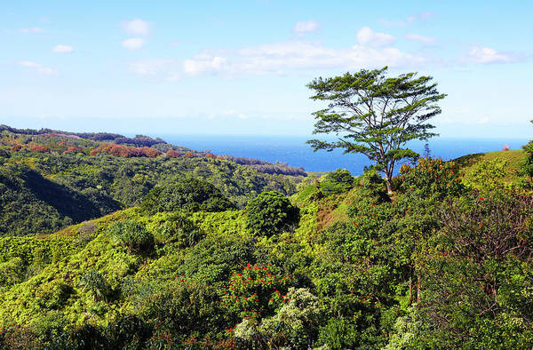 Maui Photograph - Trees Along Maui North Shore by Allan Baxter
