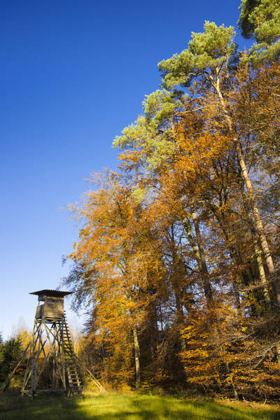 Photograph - Trees And Deerstand In Autumn by Matthias Hauser
