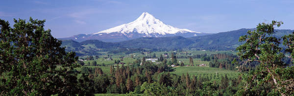 Mt Hood Photograph - Trees And Farms With A Snowcapped by Panoramic Images
