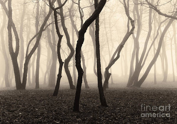 Trees And Fog No. 1 Art Print