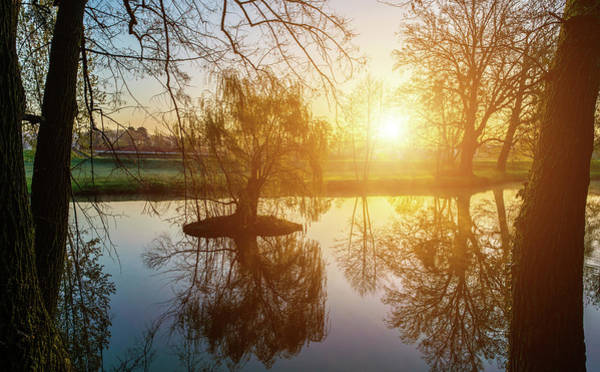 Wall Art - Photograph - Trees And Lake At Sunrise by Wladimir Bulgar/science Photo Library