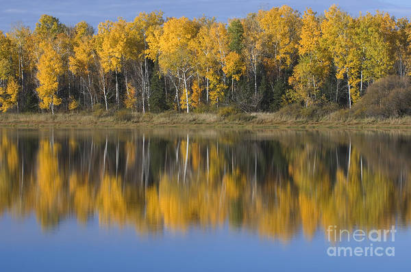 Photograph - Trees And Reflection by John Shaw