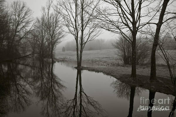 Photograph - Trees And Reflections by David Gordon
