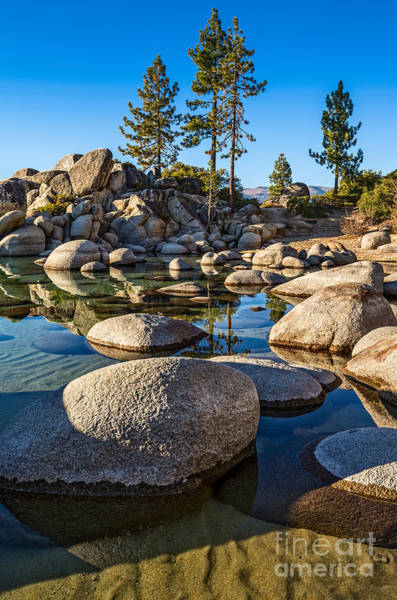 Wall Art - Photograph - Trees And Rocks by Jamie Pham
