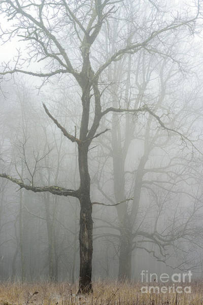 Photograph - Trees And Winter Fog by Thomas R Fletcher