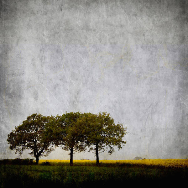 Wall Art - Photograph - Trees At Sunrise by Carol Leigh