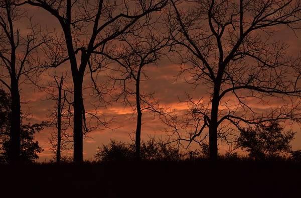 Trees At Sunrise Art Print