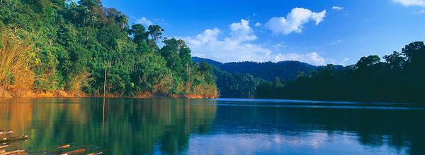 Trees At The Lakeside, Chiaw Lan Lake Art Print