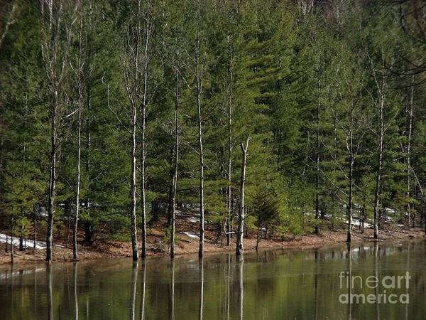 Photograph - Trees At The Reservoir by Donna Cavanaugh