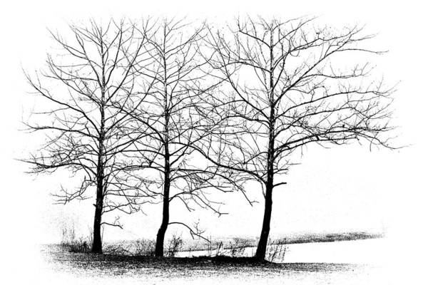 Wall Art - Photograph - Trees At Water's Edge by Tom Mc Nemar
