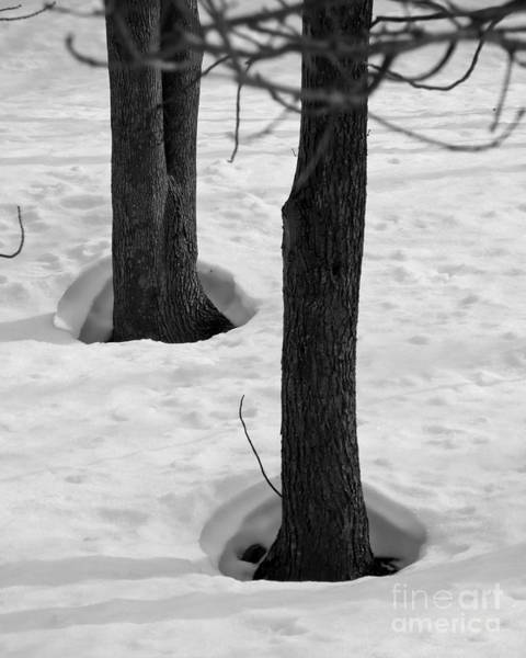 Photograph - Trees Body Heat by Kristen Fox