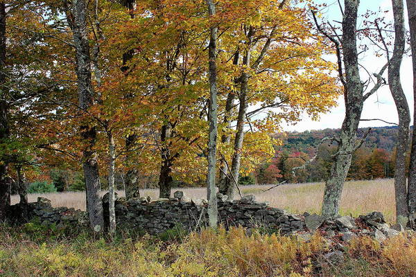 Sullivan County Photograph - Trees By A Stone Fence by Brian Lucia