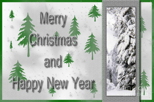 Photograph - Trees For Christmas by Randi Grace Nilsberg