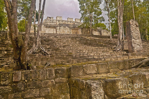 Campeche Photograph - Trees Grow At Calakmul Ruins by Ellen Thane