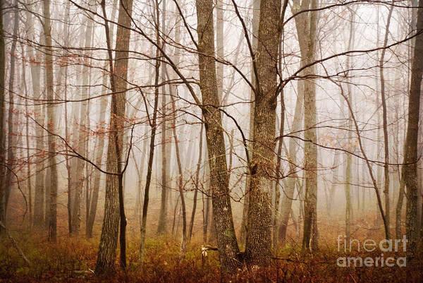 Photograph - Trees I by Debra Fedchin
