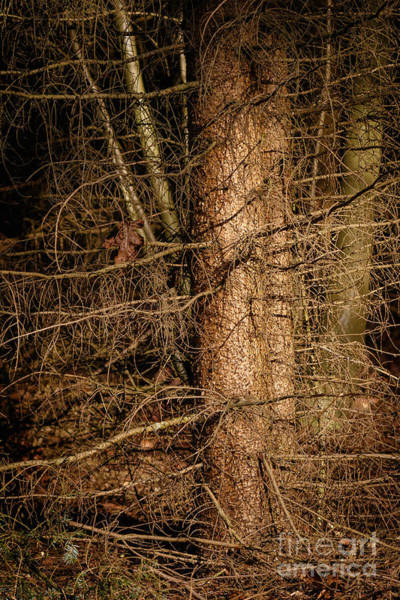 Photograph - Trees In A Dark Forest by Nick  Biemans