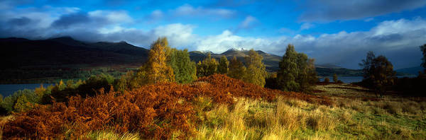 Peacefulness Photograph - Trees In A Field, Loch Tay, Scotland by Panoramic Images
