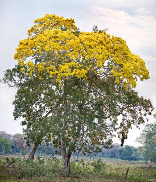 Wall Art - Photograph - Trees In A Field, Three Brothers River by Panoramic Images