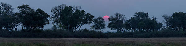 Okavango Delta Photograph - Trees In A Forest At Dusk, Kings Pool by Panoramic Images