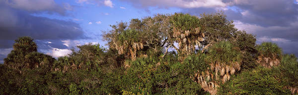 Peacefulness Photograph - Trees In A Forest, Venice, Sarasota by Panoramic Images