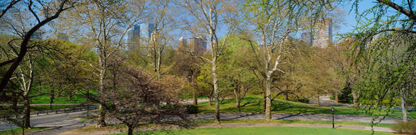 Wall Art - Photograph - Trees In A Park, Central Park West by Panoramic Images