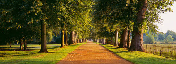 Peacefulness Photograph - Trees In A Park, Oxford, Oxfordshire by Panoramic Images
