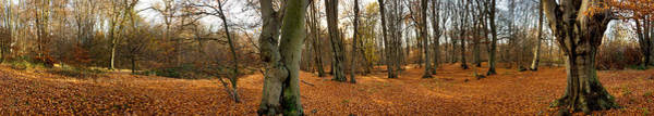 Epping Wall Art - Photograph - Trees In Autumn, Epping Forest, Essex by Panoramic Images