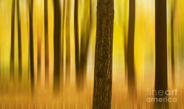 Photograph - Trees In Autumn Forest by Rima Biswas