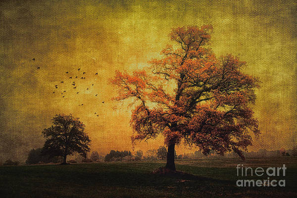 Photograph - Trees In Autumn by Jutta Maria Pusl