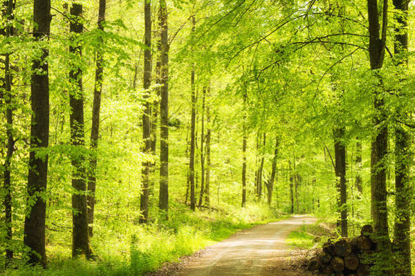 Photograph - Trees In Bright Green Forest In Spring by Matthias Hauser