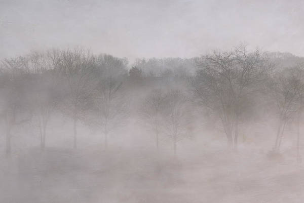 Trees In Fog Art Print by Carol Erikson