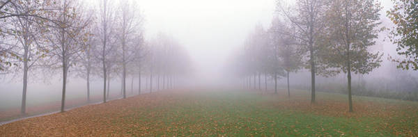 Envelop Wall Art - Photograph - Trees In Fog Schleissheim Germany by Panoramic Images
