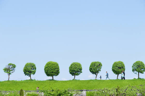 Ground Photograph - Trees In Grounds Of Peterhof Palace by Lou Jones