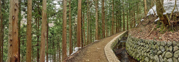 Wall Art - Photograph - Trees In Jigokudani Monkey Park by Panoramic Images